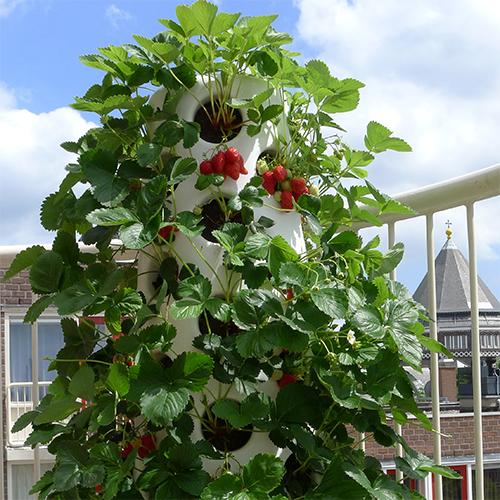 vertical-garden-tube-aardbeien